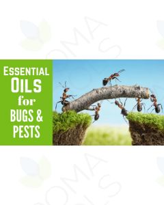 """""""Essential Oils for Bugs and Pests"""" Essential Oil Academy Digital Online Class"""