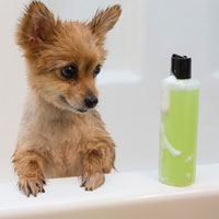 Pet Shampoo with Essential Oils